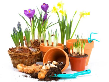 plantas tipo bulbosas