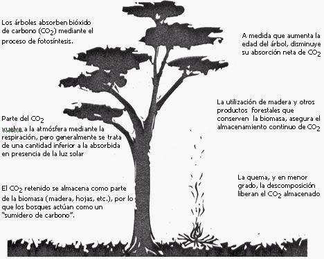 Para qu sirven los rboles ideas para jardines y for Imagenes de las partes del arbol