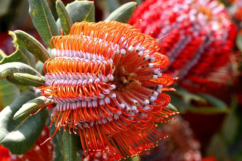 arbusto flor