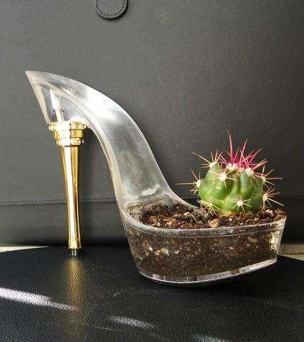 cactus zapato