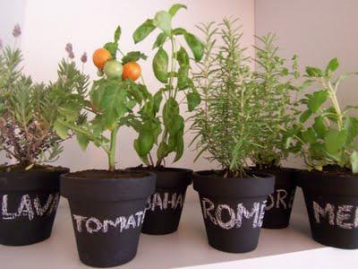 macetas plantas