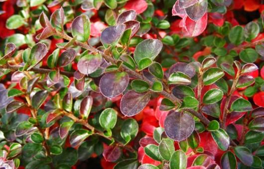 Plantas de exterior ideas para jardines y decoraci n - Plantas de exterior con flor ...