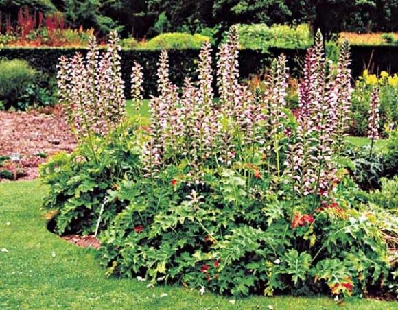 Plantas de exterior ideas para jardines y decoraci n - Jardines de exterior ...