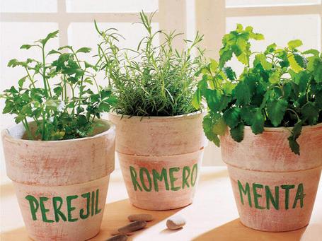 Hierbas decorar con aromaticas incluir cocina pictures - Plantas aromaticas en la cocina ...