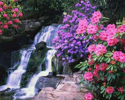 jardin primavera