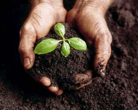 abono organico