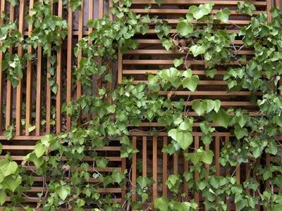 Decora con enredaderas y trepadoras ideas para jardines - Enredaderas de interior ...