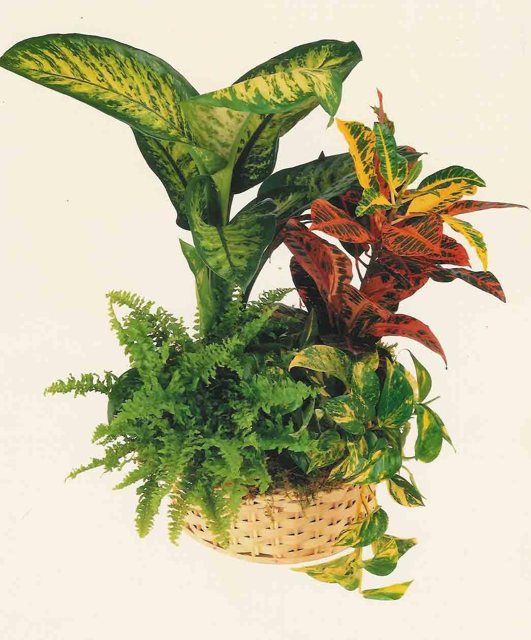 Plantas decorativas para interiores decora o casas - Plantas decorativas de interior ...