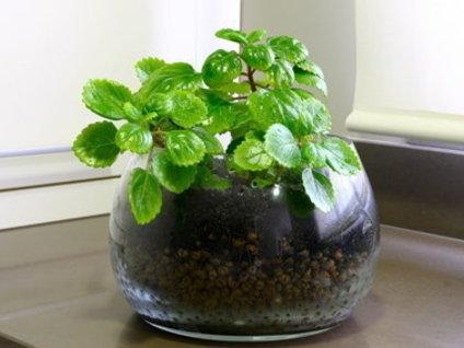 De feng shui y plantas naturales the deco soul for Planta del dinero feng shui