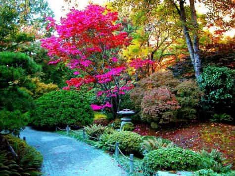 Cómo recuperar el jardín de cara a la primavera