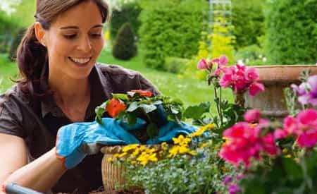 cuidados trucos caseos plantas