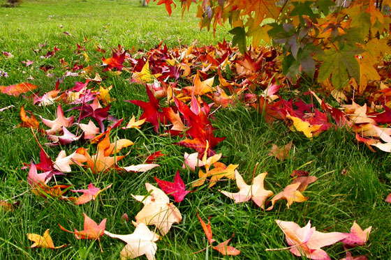 jardin otoño