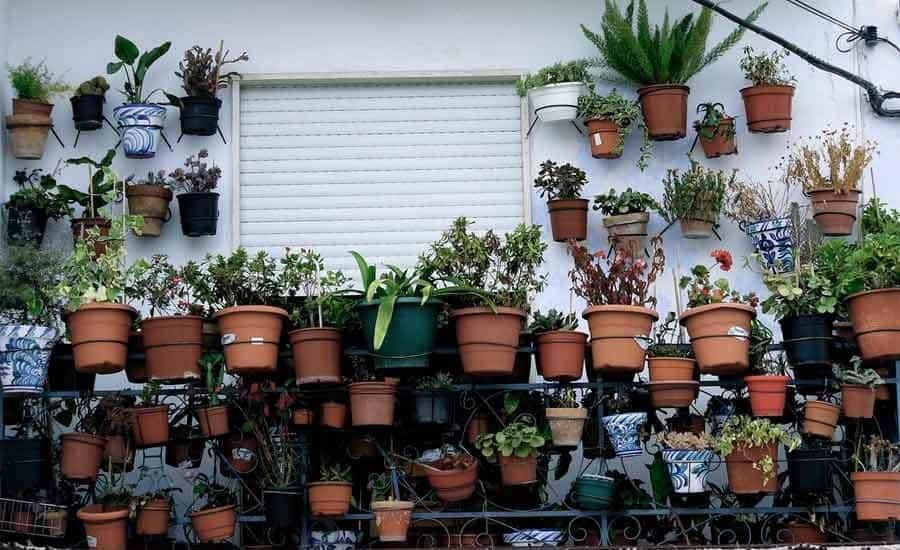 regar plantas maceta gamuza