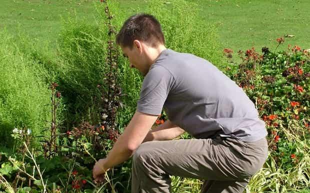 consejos jardineria