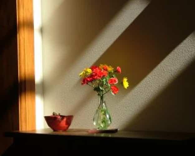 cuidar flores jarron