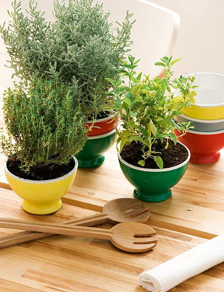 Decora con plantas ideas para jardines y decoraci n for Decoracion de casas con plantas naturales