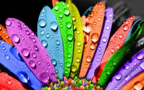 significado colores flores
