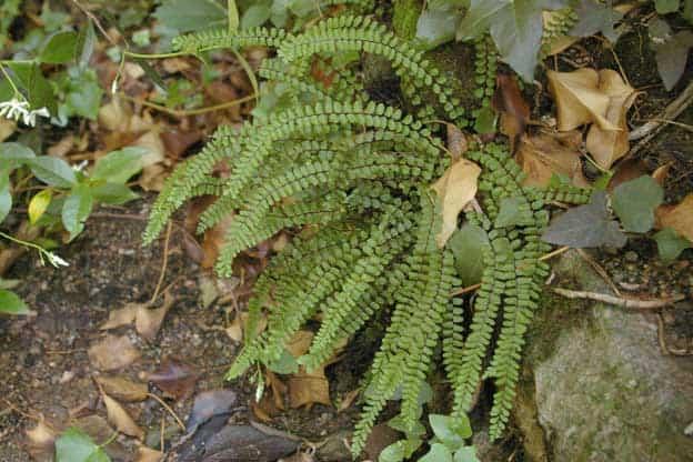 aspecto plantas
