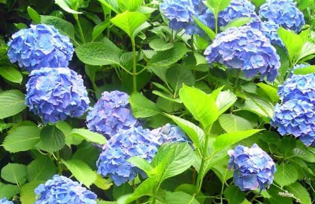 cuidar plantas verano