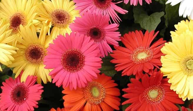 flores olor jardin