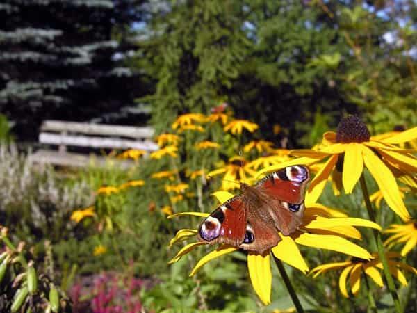 jardin mariposas