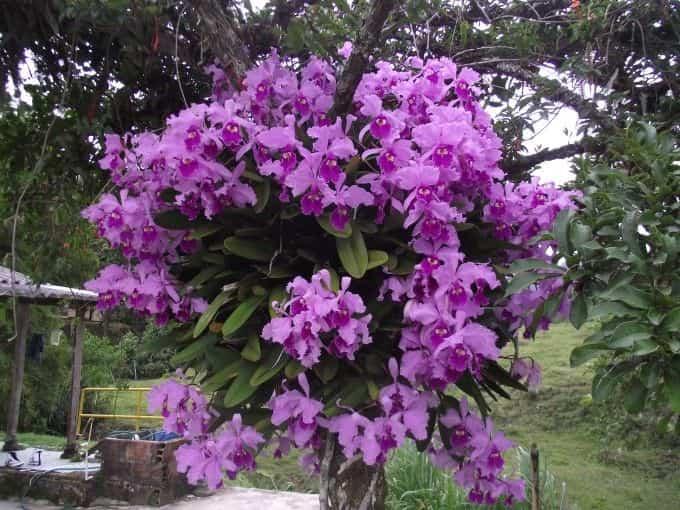 orquideas arboles
