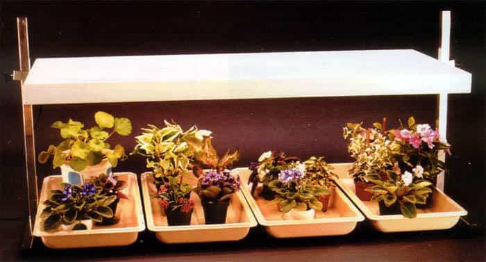 Luz artificial para tus plantas - Ideas para jardines y decoración