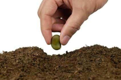 plantar semilla