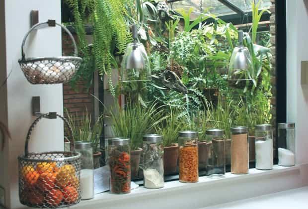 plantas interior cuidados