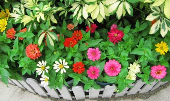 plantas perennes mantenimiento