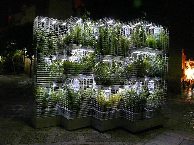 Plantas arom ticas en casa ideas para jardines y decoraci n for Asociacion de plantas aromaticas