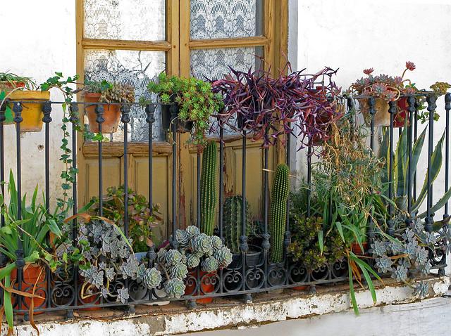 Coloca plantas en tu terraza for Plantas de balcon para todo el ano