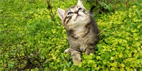 gatos jardin