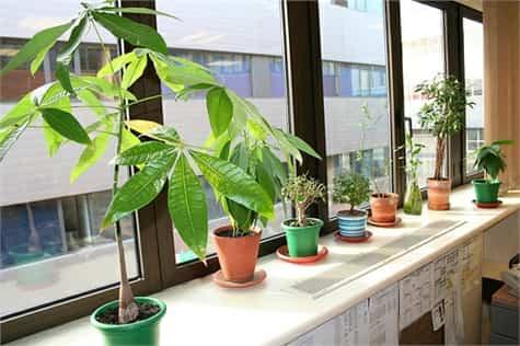 planta ideal ambiente