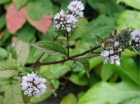 plantas insectos1