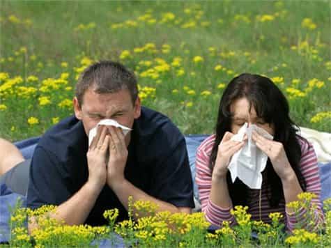 alergia polen1