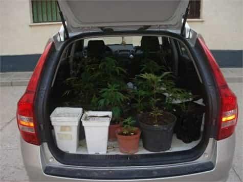 plantas mudanza1