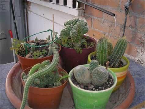 Cactus interior1