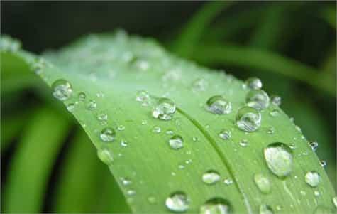agua salina jardin1