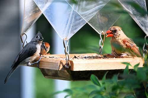 atraer aves jardin