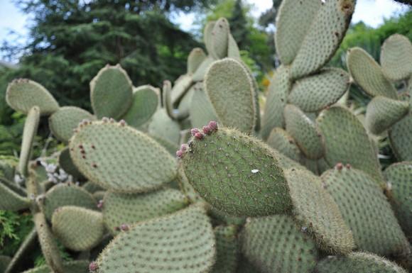 cactus2 e1369081014177