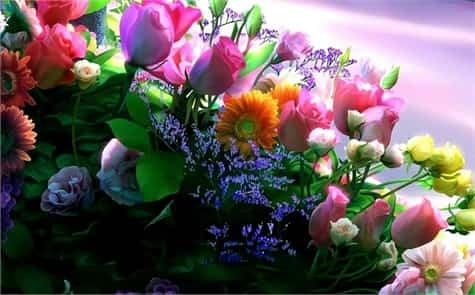 cuidados plantas flores