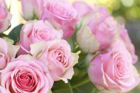 cuidados rosales verano