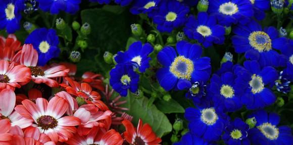 D nde colocar flores de temporada - Plantas de temporada primavera ...