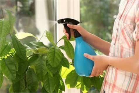 limpiar plantas interior1