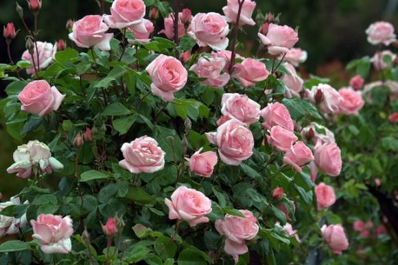 rosales1 e1369250756604