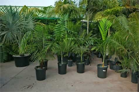 Plantas interior adaptacion1