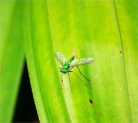 ahuyentar mosquitos1