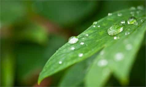 humedad aire plantas