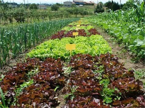 mas vegetales huertos1